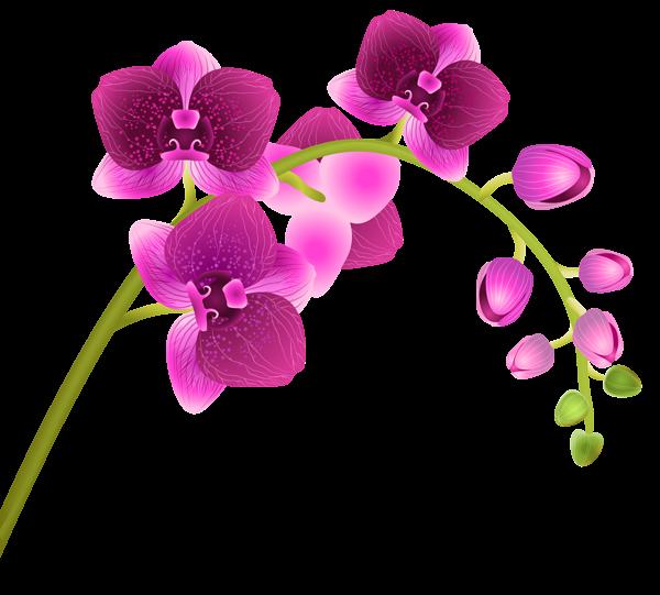 Orchid Flower Transparent PNG Clip Art Image | flowers ...