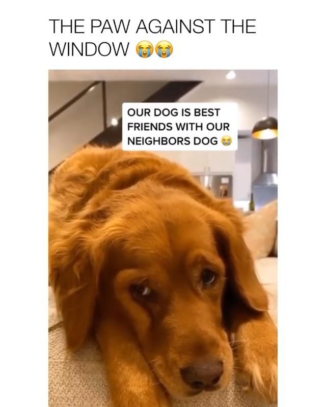 The paw agains the window😢😍