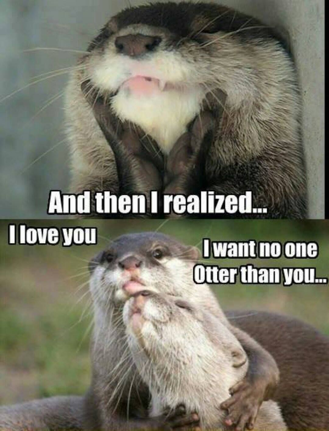 no one otter than you. Otters cute, Otters, Cute funny