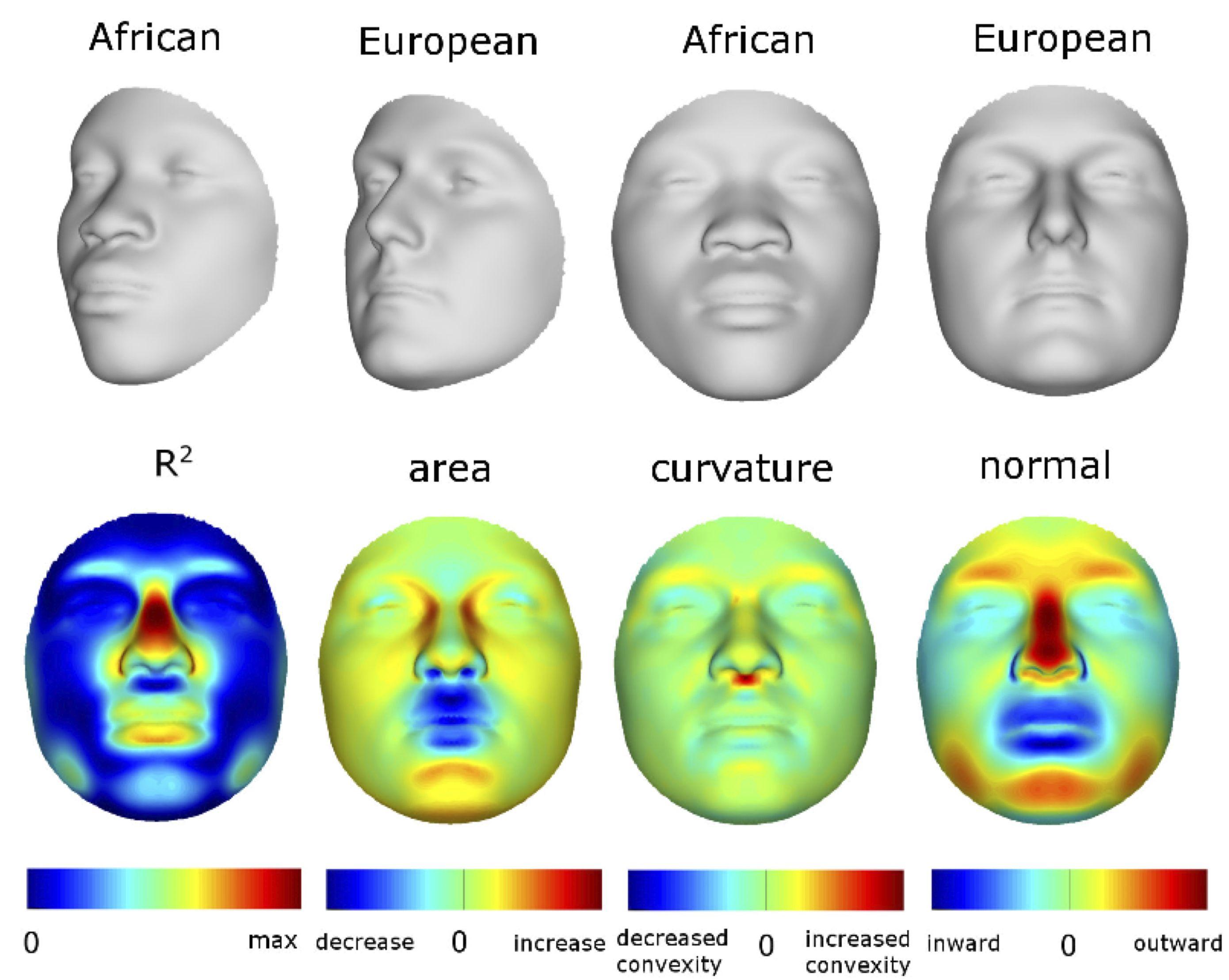 European Facial Description