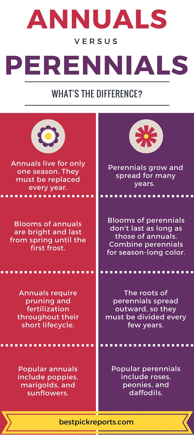 Know The Differences Between Annuals And Perennials