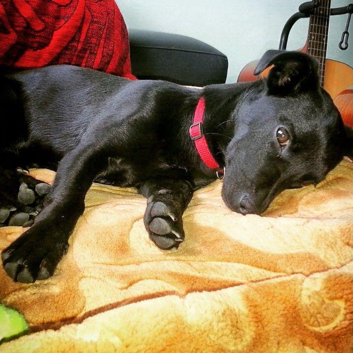 Neska.  Black dog