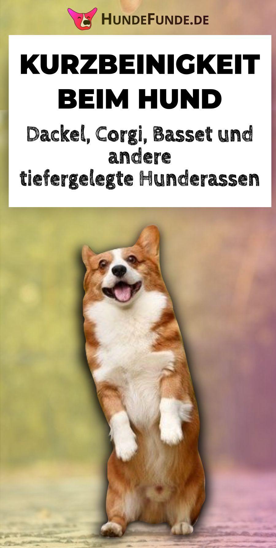 Chondrodysplasie Und Chondrodystrophie Dackelbeine Gehwarzen Und Kurzbeinigkeit Hunde Dackel Hunderassen