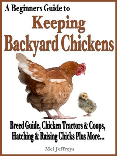 A Beginners Guide To Keeping Backyard Chickens   Breeds Guide, Chicken  Tractors U0026 Coops,