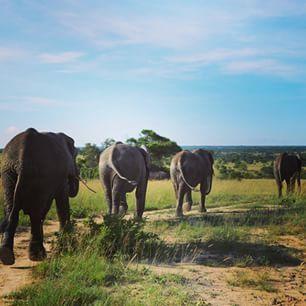 Such a fun weekend! #lionencounter #antelopepark #zimbabwe por: lalesage