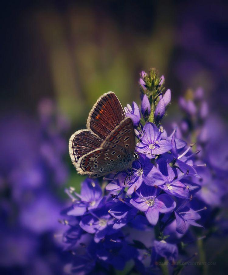 Pin by jo *・゚ on • ᴳᴬᴿᴰᴱᴺ • ᴾᵁᴿᴾᴸᴱ • Butterfly garden