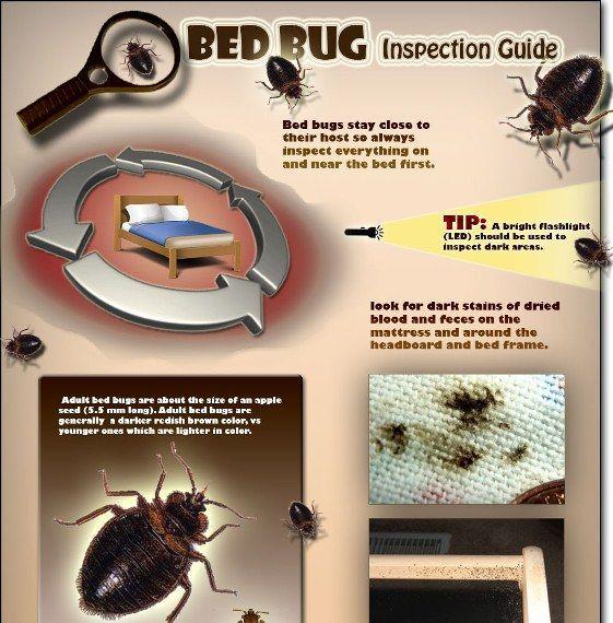 Bed Bug Inspection Guide Pest Bedbug Bed Bugs Bugs Bug Bite