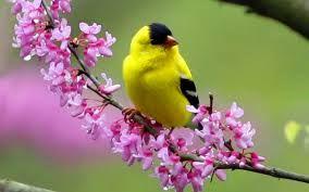 Afbeeldingsresultaat voor bird