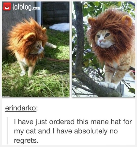 I Think I Need A Cat
