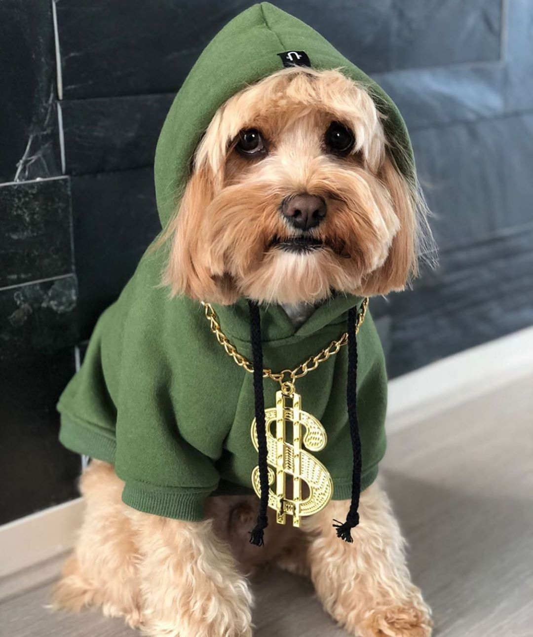 Get Rich Or Die Tryin Humphrey D Dog Bling Prettyflyforawhiteguy Who Can Name Rapper Cavoodle Oodle P Dog Hoodie Best Dogs Funny Dogs