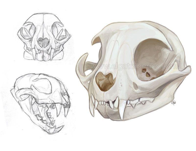 Cat Skulls by Gato-Iberico | Tattoo | Pinterest | Cat skull, Skull ...