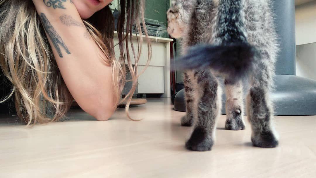Ieri in ufficio c'era lui. Un microbino di due mesi scarsi recuperato dalla mia titolare dal ciglio di una strada e poi adottato senza esitazione, premurosamente.  Ho pensato al fatto che un giorno, quando potrò, avrò un gatto, un tigrotto magari, un bestiolino grigio nero con gli occhi strafottenti.  #catsofinstagram #cat #cats  #cats_of_instagram  #c #magariungiorno Ieri in ufficio c'era lui. Un microbino di due mesi scarsi recuperato dalla mia titolare dal ciglio di una strada e poi adottat #magariungiorno
