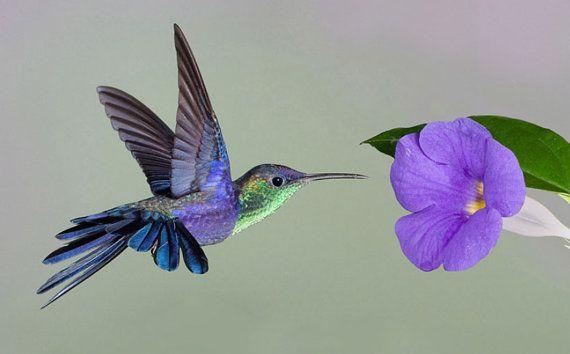 Cross Stitch Pattern Hummingbird and Flower 14 ct.