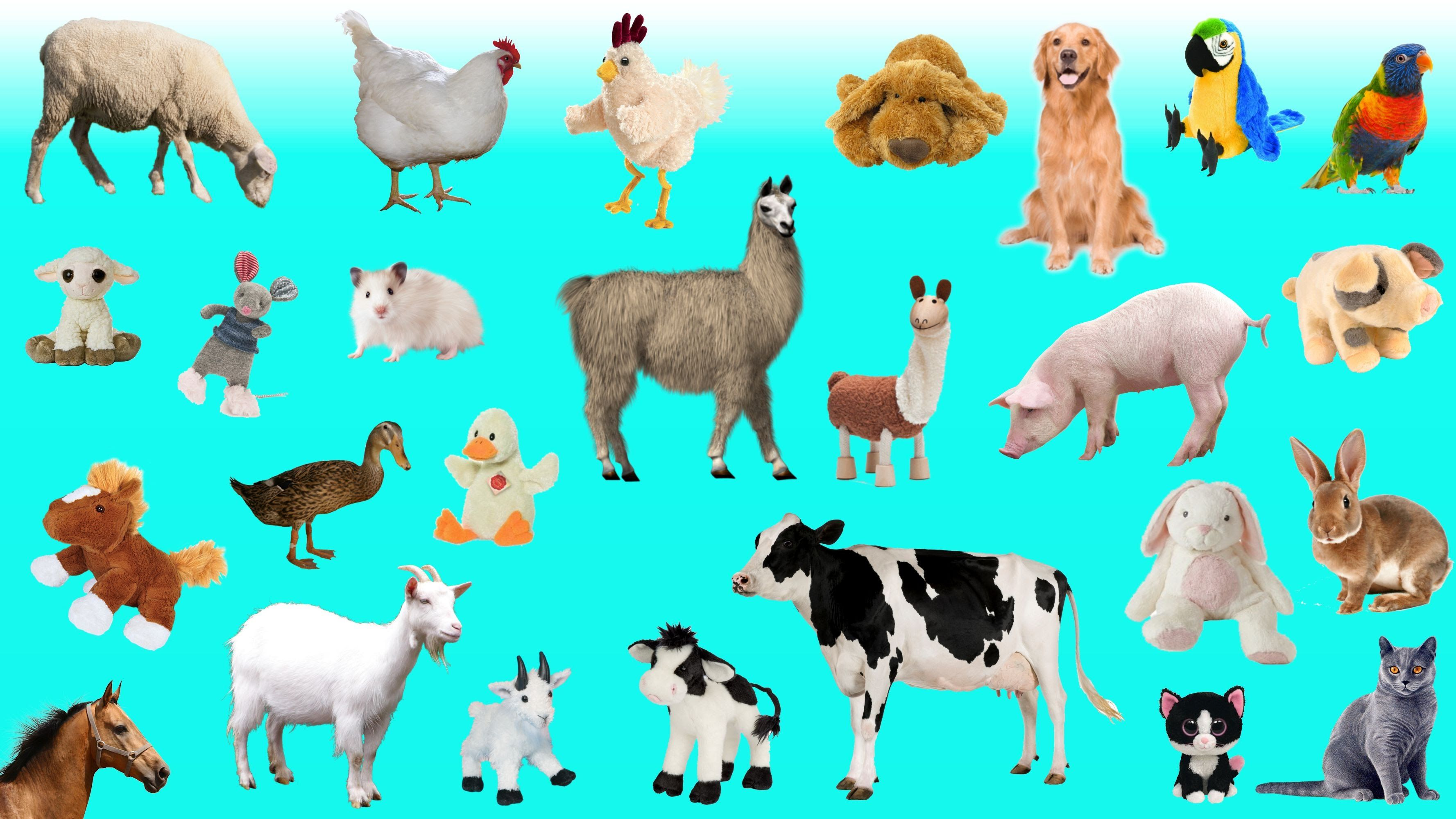 learn domestic farm animals names and sounds for toddlers kids children - Animal Pictures For Toddlers