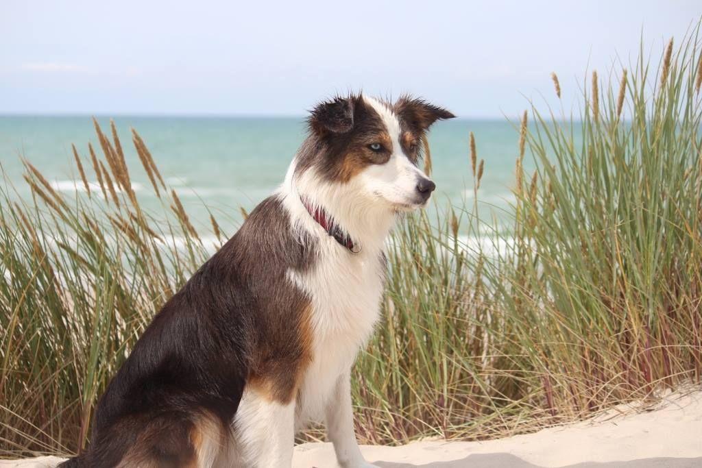 Pin Auf Urlaubsbilder Urlaub Mit Dem Hund