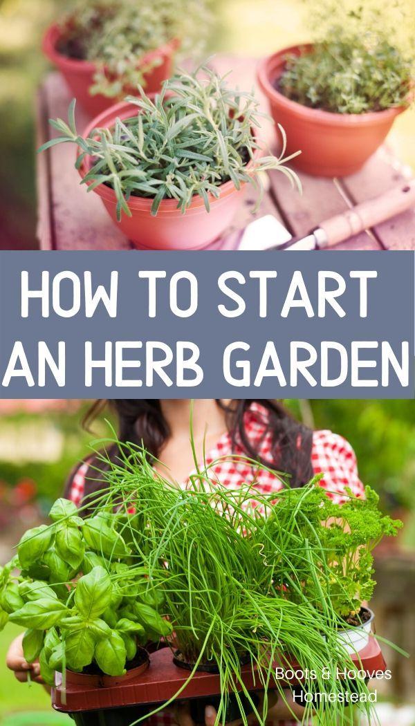 Photo of start an herb garden