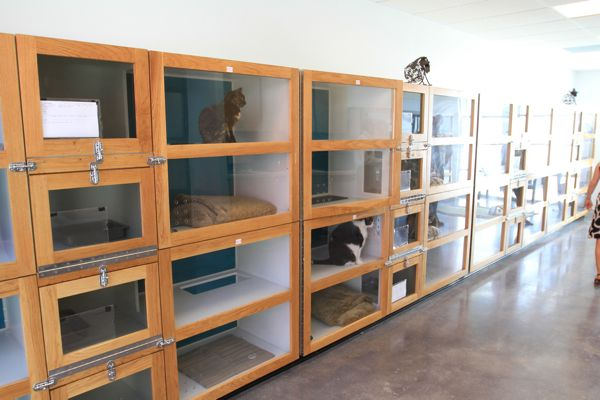 Luxury Dog Boarding Kennels Related To Dog Daycare
