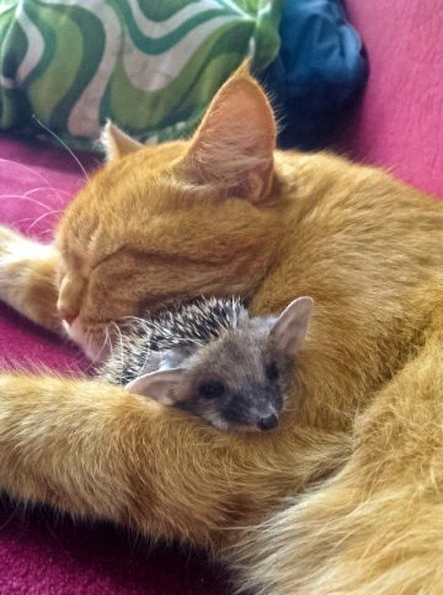 Mother cat with hedgehog Amazing World #cute #lovely #pretty