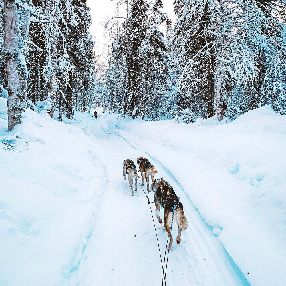 Dog sledding tour denali national park alaska in 2020