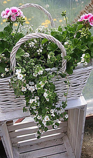 Rosette Main Que Planter Des Fleurs En Mai A La Floraison Jusqu A L Automne Les Fleurs Sur Window Box Flowers Container Flowers Container Gardening Flowers