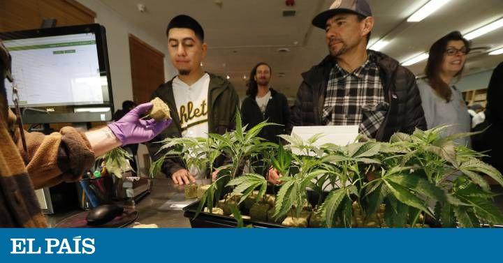 Uno de cada cinco estadounidenses tienen acceso a cannabis para uso recreativo con esta apertura