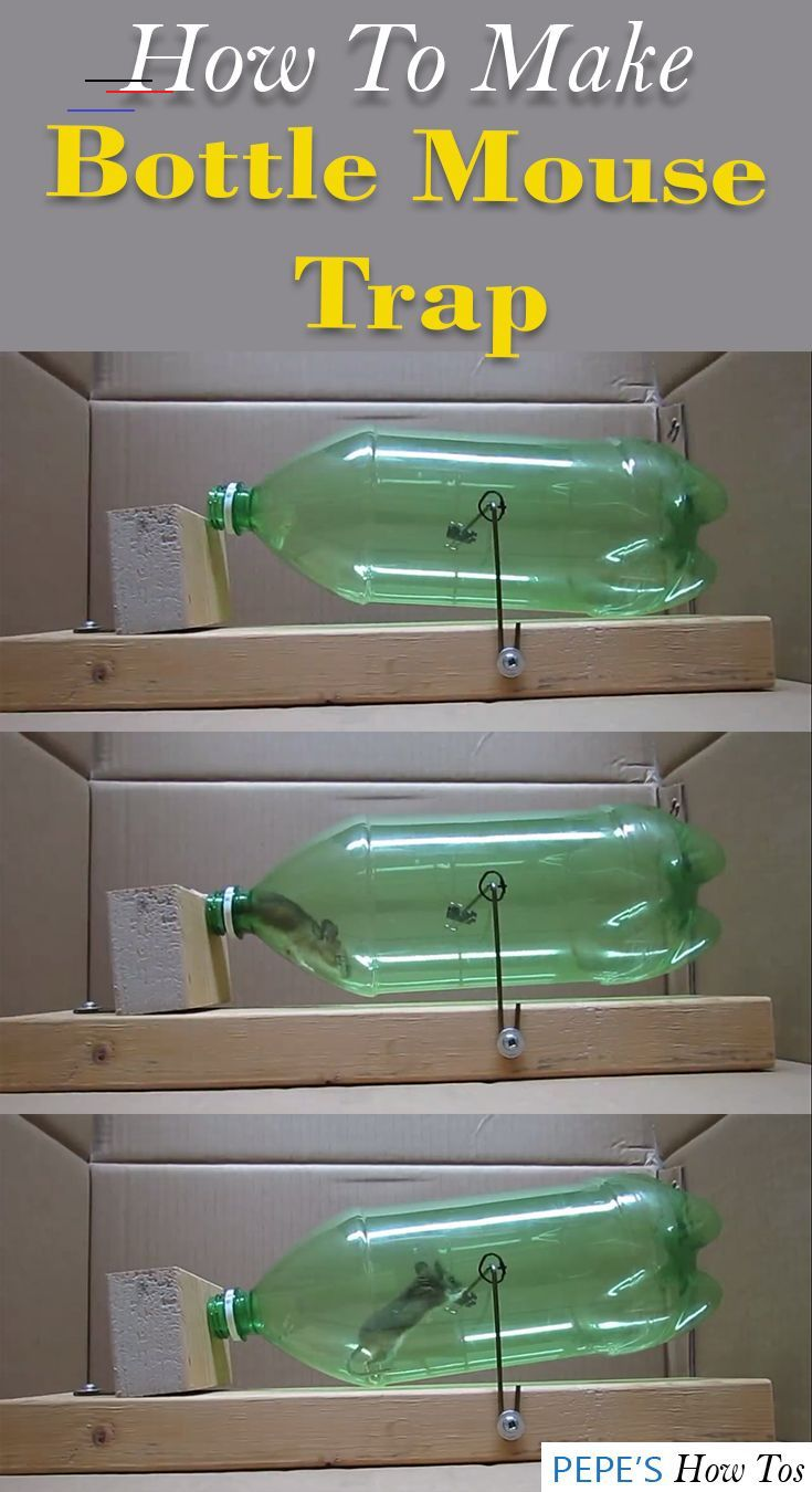 How to make a mouse trap from plastic bottle mousetrap