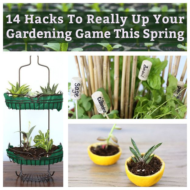 14 Hacks To Really Up Your Gardening Game This Spring With Images Home Vegetable Garden Vegetable Garden Plants