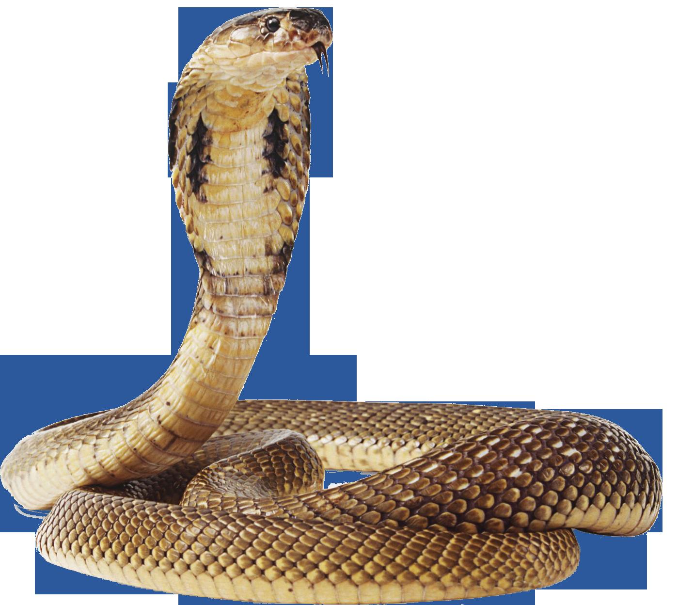Snake Png Image Editing Background Mahadev Image