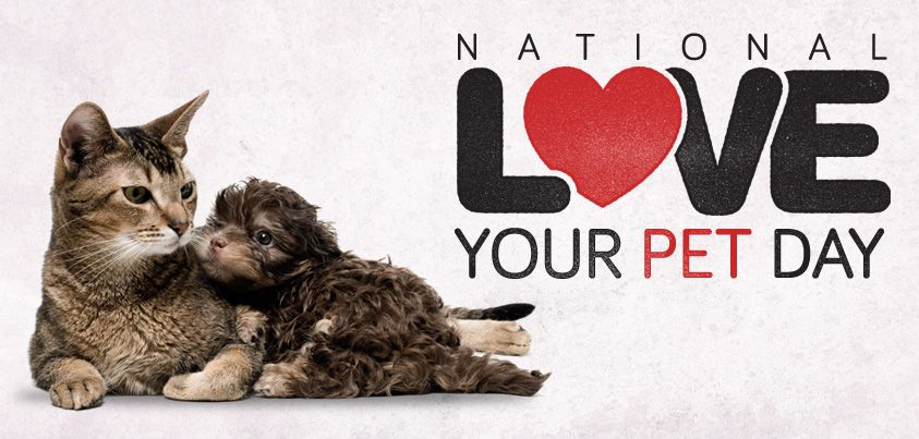 Image result for national love your pet day