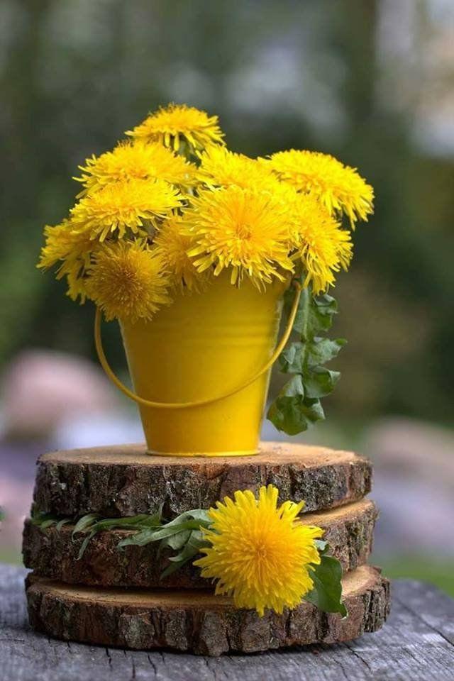pin von lydia piechnik auf natur bilder pinterest blumen gelb und die sonne. Black Bedroom Furniture Sets. Home Design Ideas