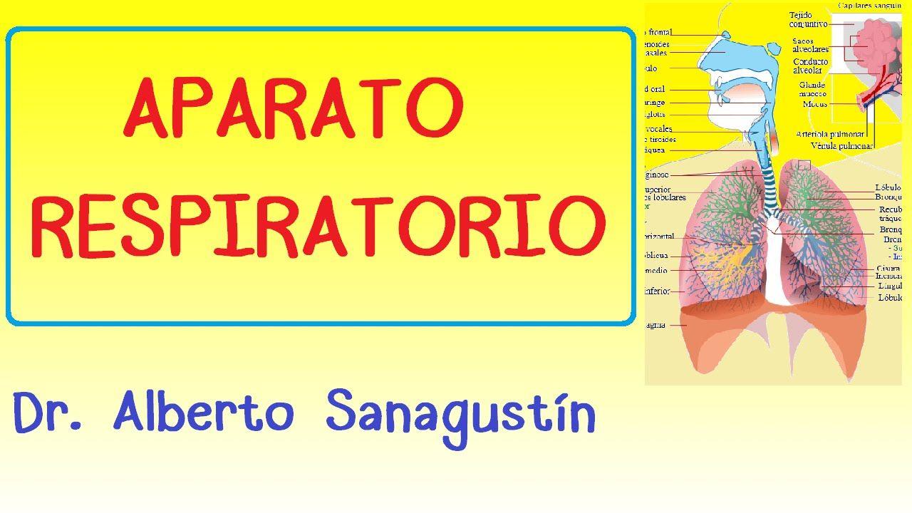 Aparato Respiratorio Explicado Fácil Respiratorio Aparato Respiratorio Anatomia Y Fisiologia