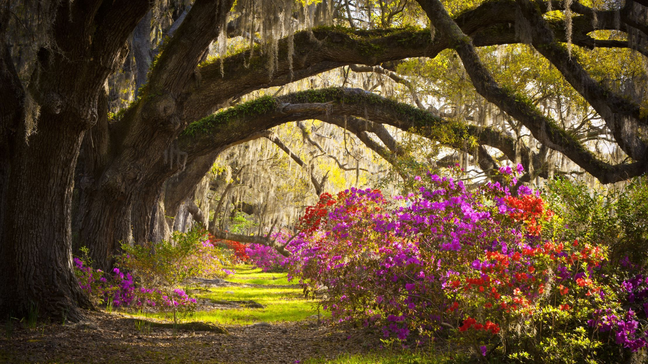 4e2ebfbb0ae4534b7d96c9b22ef57893 - Magnolia Plantation And Gardens Savannah Ga