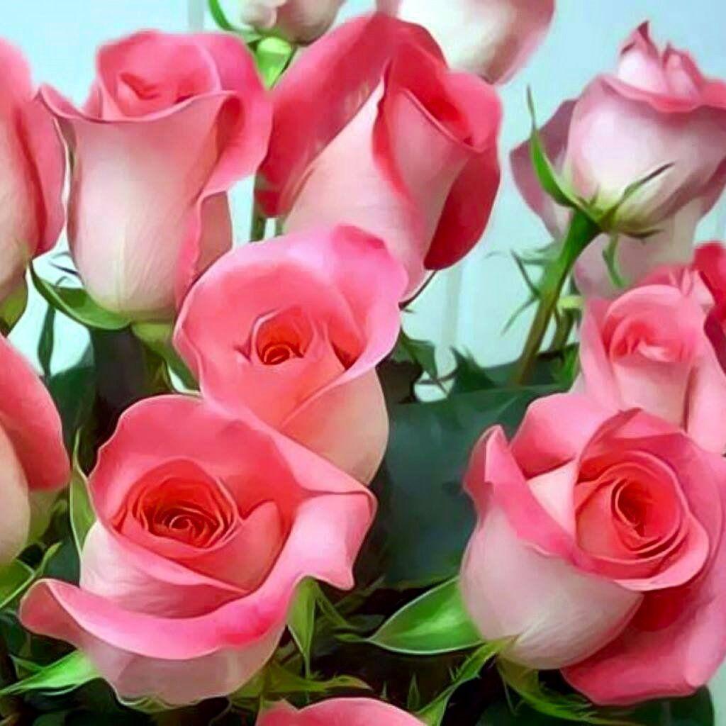 Pin by gardenia on roses lokelani 5 pinterest explore beauty of nature beautiful roses and more izmirmasajfo