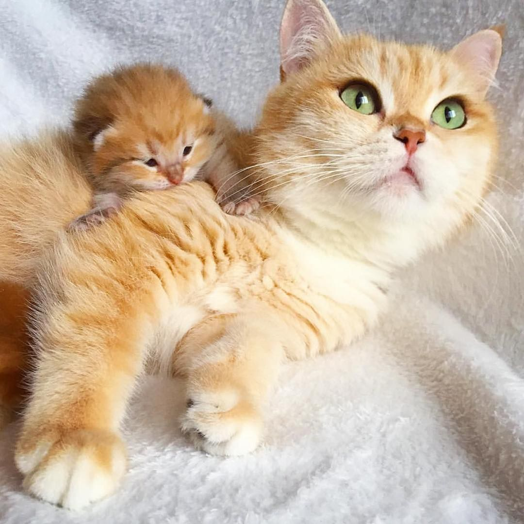 Thursday S Most Adorable A Proud Mama Cat And Her Baby Mini Me Mama Cat Cute Animals Cats