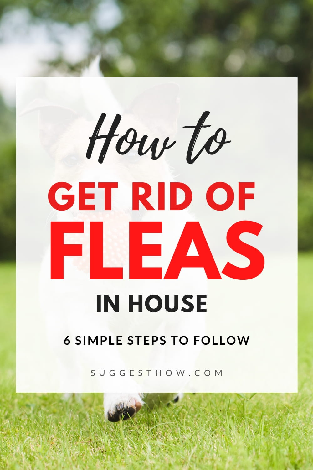 How to Get Rid of Fleas in House 6 Step by Step Guide in