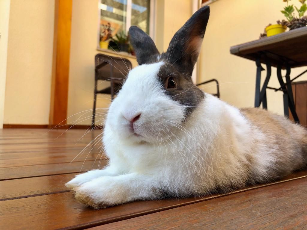 Well hello there hooman - Rabbit Facts #rabbitlife #rabbitlovers #bunnylove