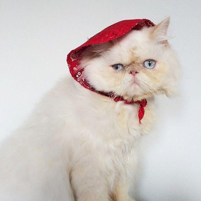 Bom dia!! #LordAries #AriesMeow #WeeklyFluff #CatsOfInstagram