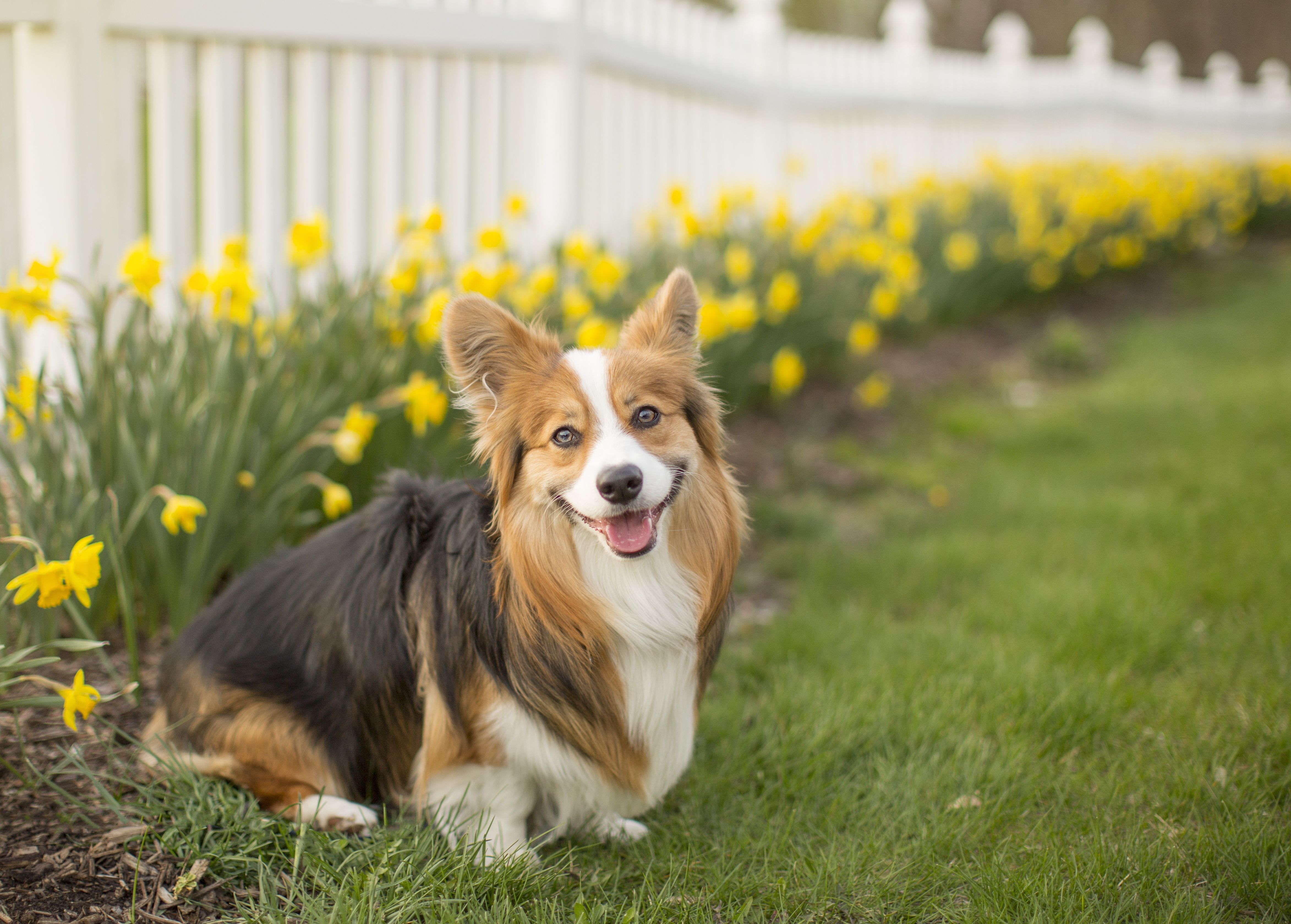 12 Garden Plants That Are Toxic To Dogs Plants Toxic To Dogs Garden Plants Common Garden Plants