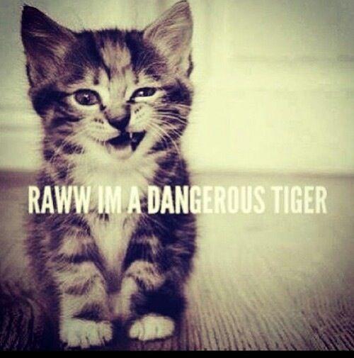 Rawrrrrr