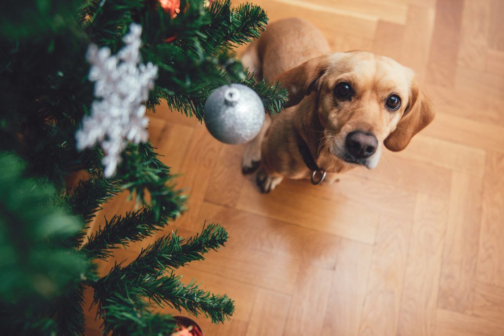 Keep Your Pet Safe During the Holidays with These 5 Tips