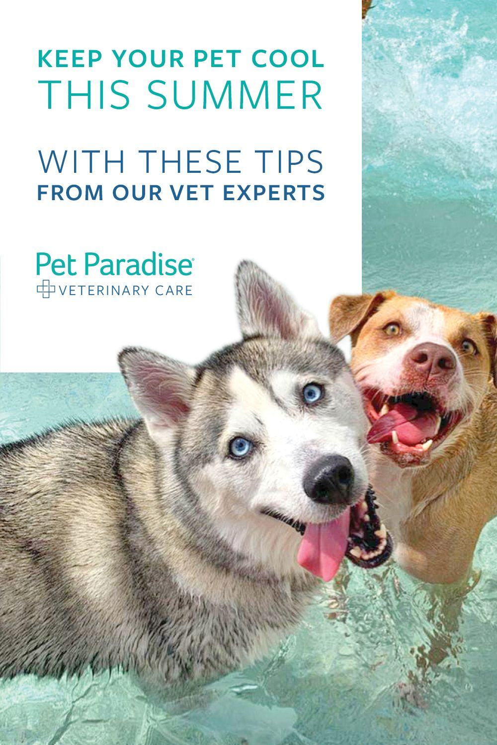 Vet Expert Tips To Keep Your Pet Cool In 2020 Pet Paradise Pets Vets