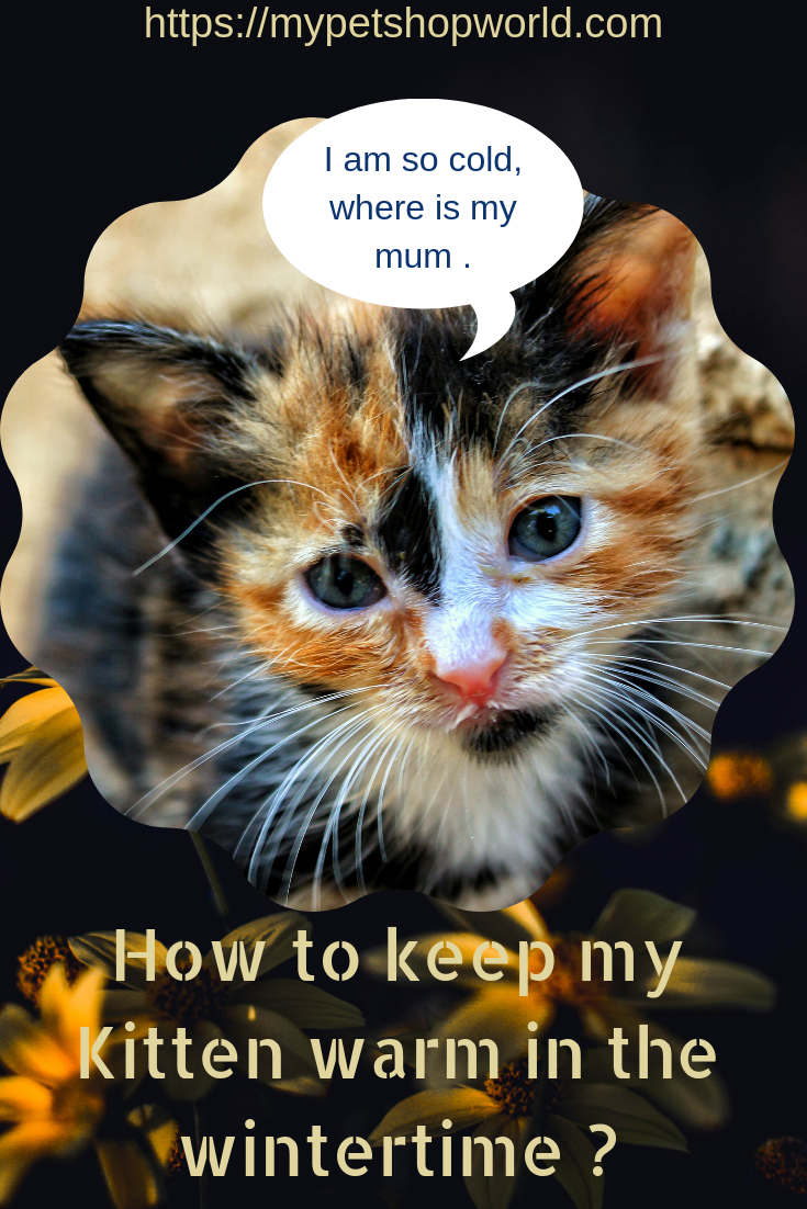 The Safest Heated Pad Beds For Cats Be Aware You Can Hurt Your Cat Cat Bed Buy A Cat Cats