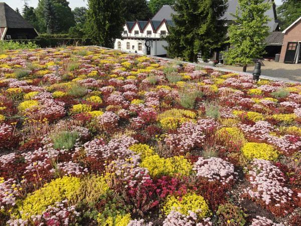 Product Nbd Zinco Floradrain Vegetatiedaken En Dakbegroeiingsystemen Dachbegrunung Dach