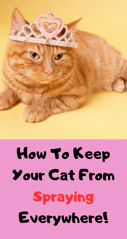 No More Cat Spraying pin Cat spray, Cat behavior, Cats