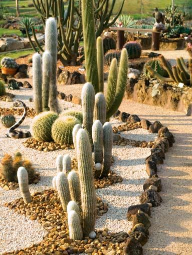 Cactus Garden Using Rocks And Gravel