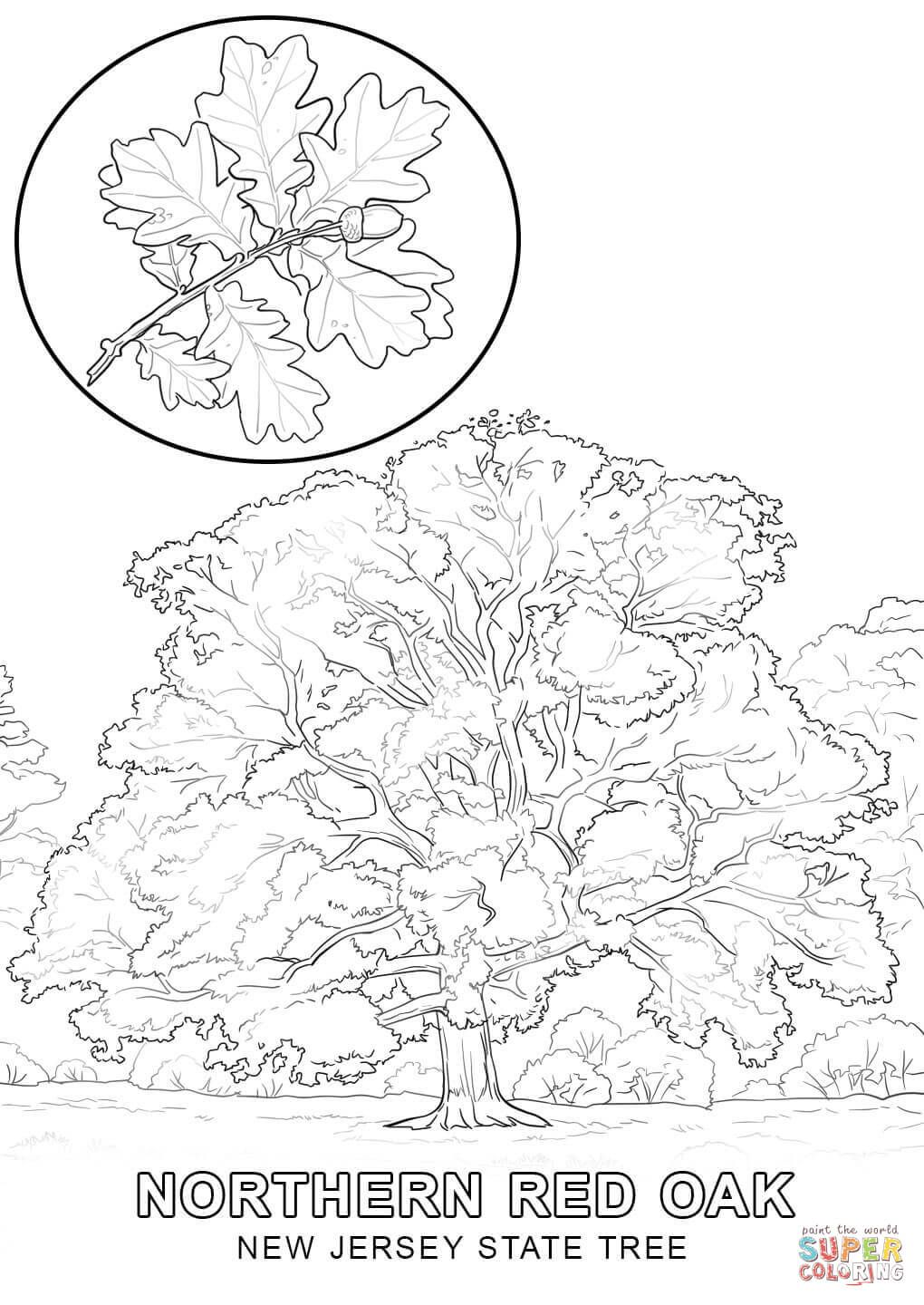 New Jersey State Tree Coloring Page Free Printable Coloring