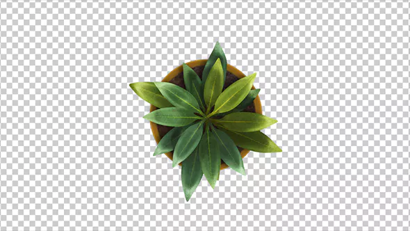 Top View Of A Plant Growing Animation Plants Top View Interior Plants