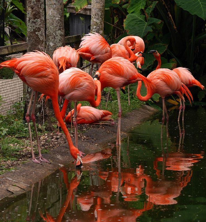 Flamingo Gardens Botanical Gardens Everglades Wildlife Sanctuary Flamingo Garden Wildlife Sanctuary Florida Attractions