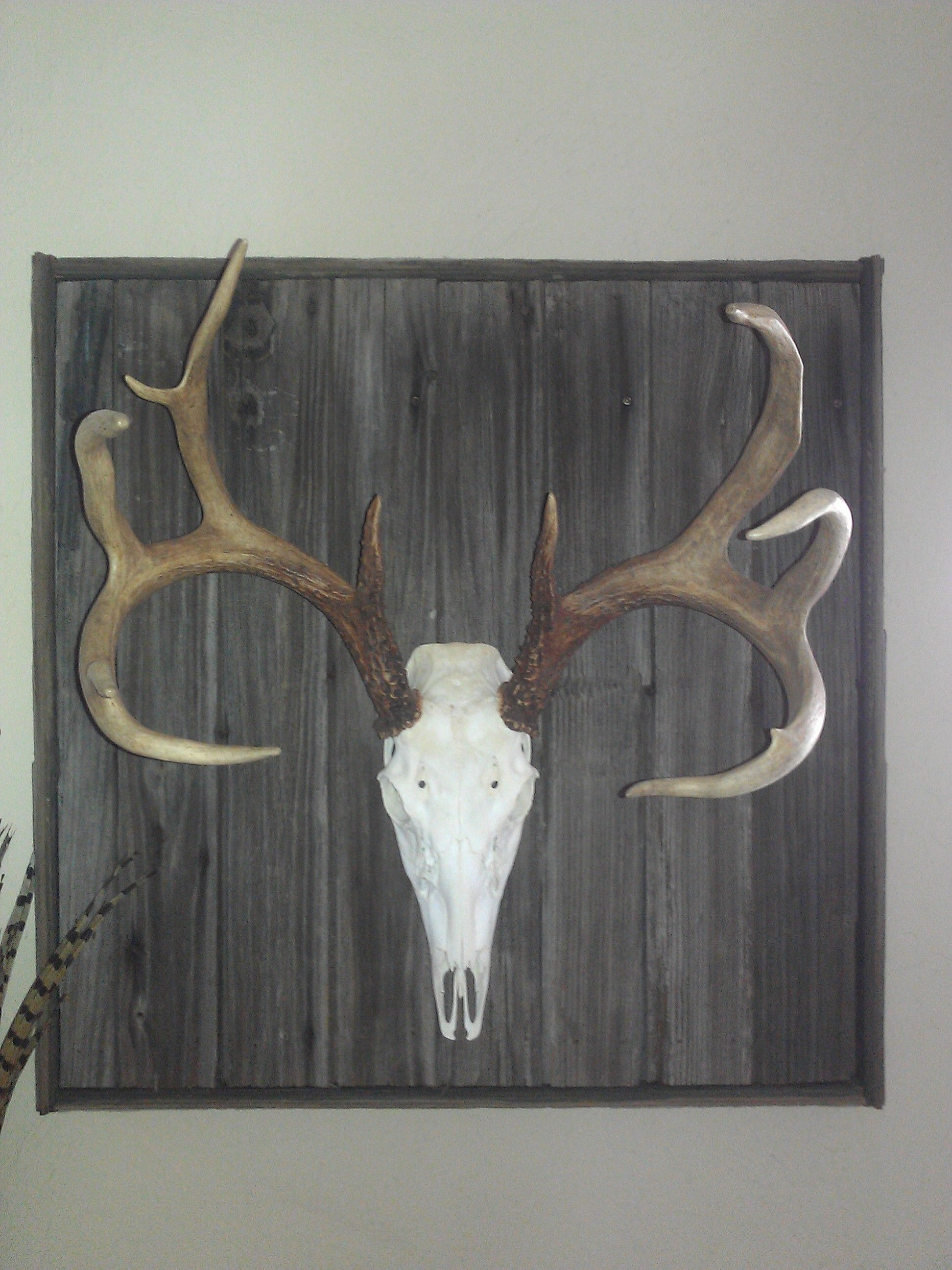 Deer skull mount ideas - Deer Mount On An Old Barn Door