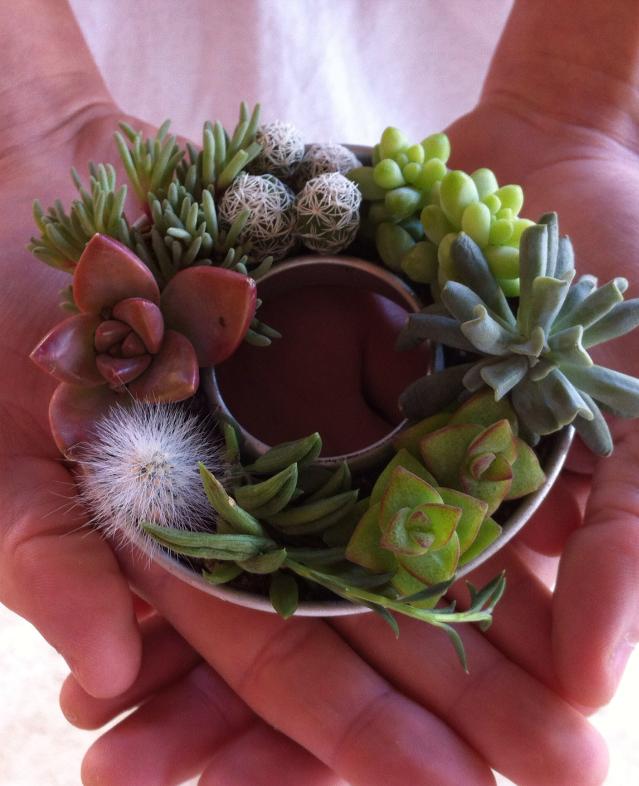 Mini Succulent Wreath Is It A Jello Mold I M Not Sure But I